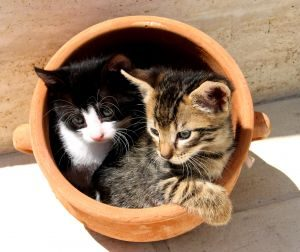 kittens-in-a-pot